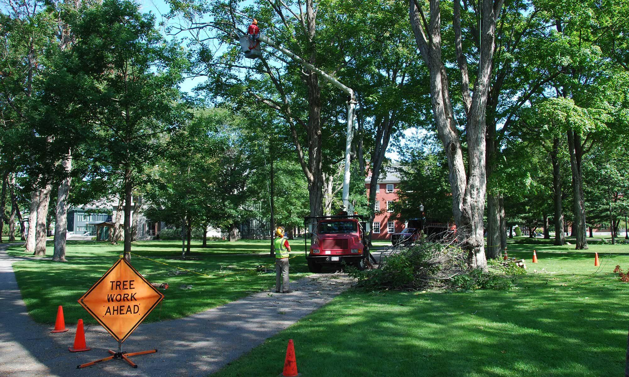 Vail's Tree Service